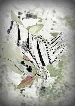Butterfly Fade by David Mckinney