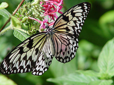 Butterfly Floral Garden by Reni Boisvert