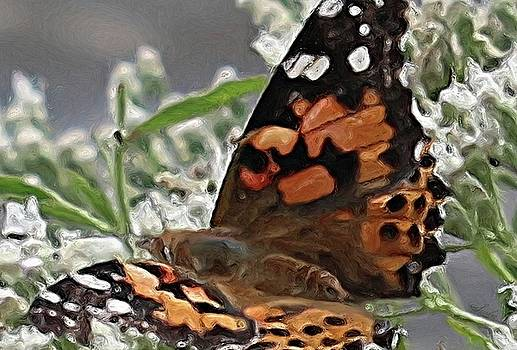 Butterfly Flowers In Stream by Susanna Katherine