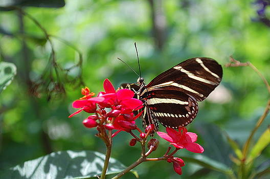 Butterfly Garden by Amanda Lonergan