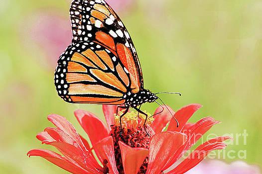 Regina Geoghan - Butterfly Garden II