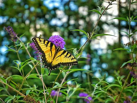 Butterfly Garden by Jessica Bouloutian