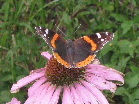 Butterfly Garden by Renee Antos