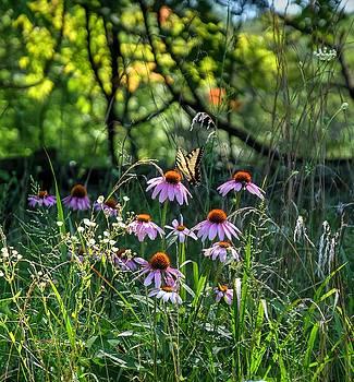 Butterfly Garden by Ronda Ryan