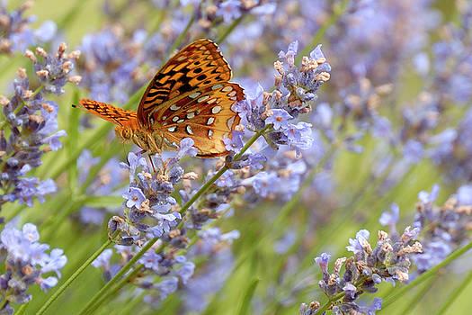 Lara Ellis - Butterfly Heaven