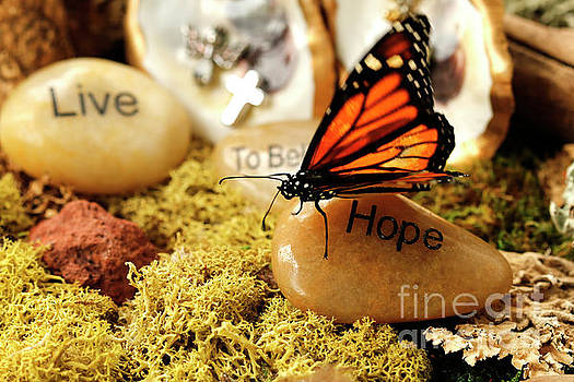 Butterfly Hope Photo by Luana K Perez