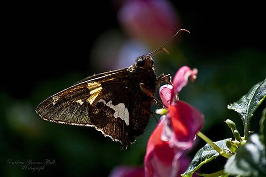 Darlene Bell - Butterfly Impatiens