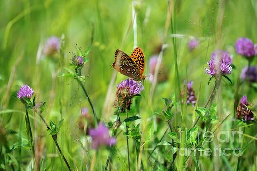 Dan Friend - Butterfly in field on flower