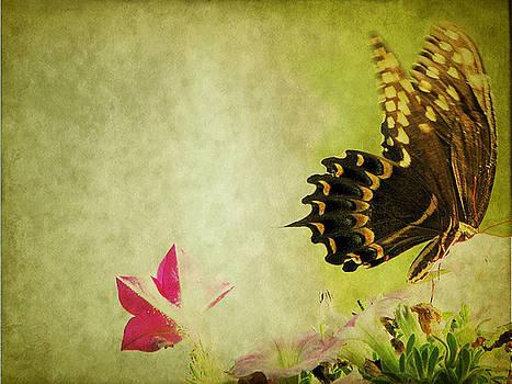 Butterfly In Layers by Dottie Dees