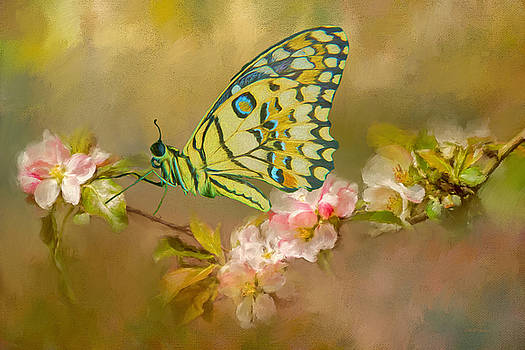 Butterfly in the Flowers 14 - Painting by Ericamaxine Price