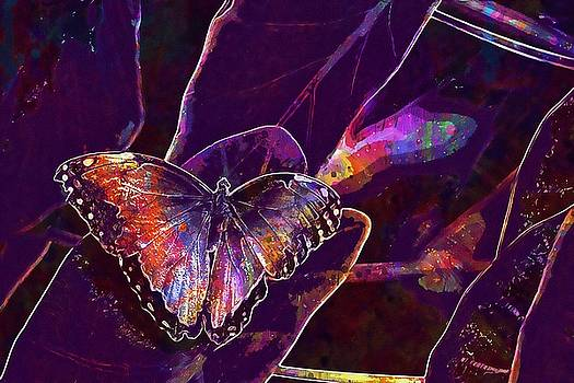 Butterfly Insect Leaves Plant  by PixBreak Art