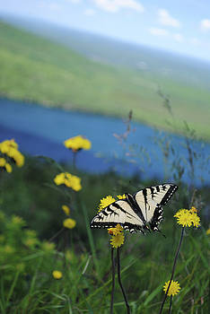 Butterfly by Jessica Fligg
