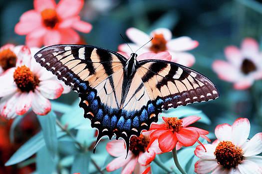Jill Lang - Butterfly