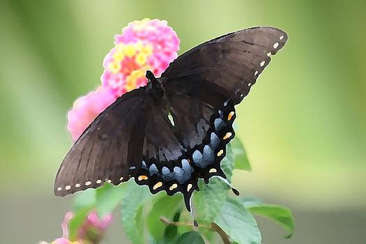 Butterfly by Kaitlin VanGorder