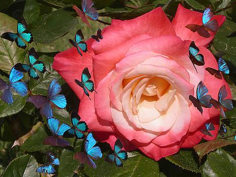 Anne Cameron Cutri - Butterfly Kisses