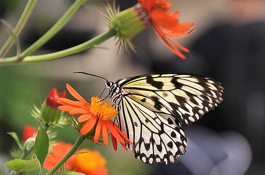 Butterfly kisses... by Marie  Gale