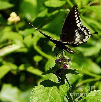 Butterfly Landing by John Eide