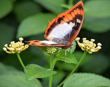 Butterfly Landing by Mary Zeman