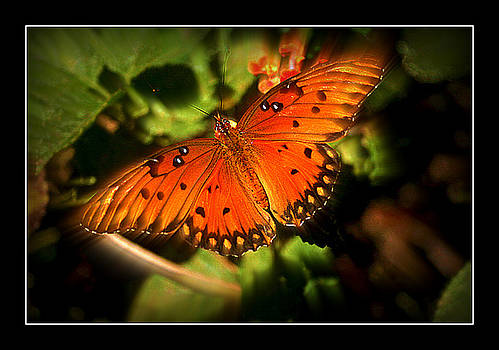 Butterfly love by Vanessa Reed