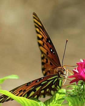 Butterfly Macro by Terri Tiffany