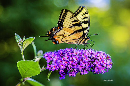 Butterfly Magic by Dale R Carlson