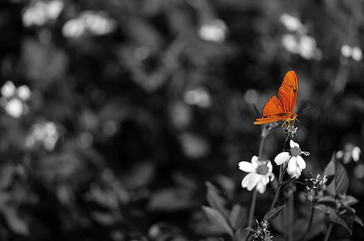 Butterfly by Mandy Wiltse