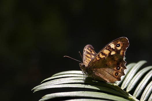 Butterfly by Mickael PLICHARD