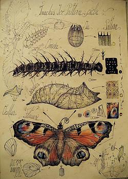 Butterfly morphogenesis by Gabriel Kelemen