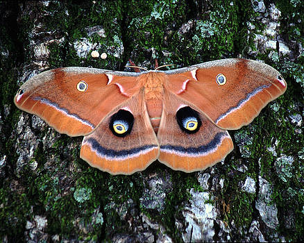 Butterfly moth by Rex E Ater