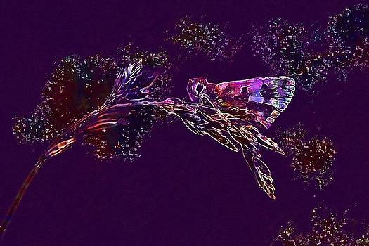 Butterfly Nature Butterflies Insect  by PixBreak Art