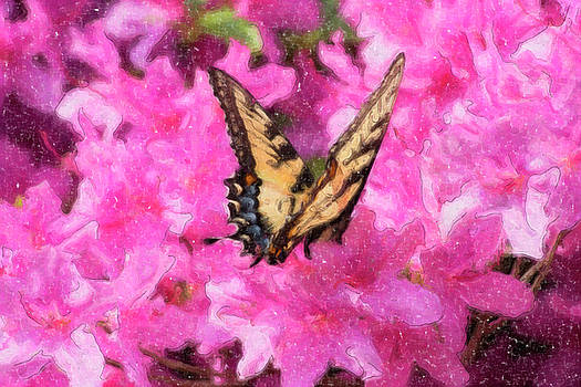 Jill Lang - Butterfly Oil Painting