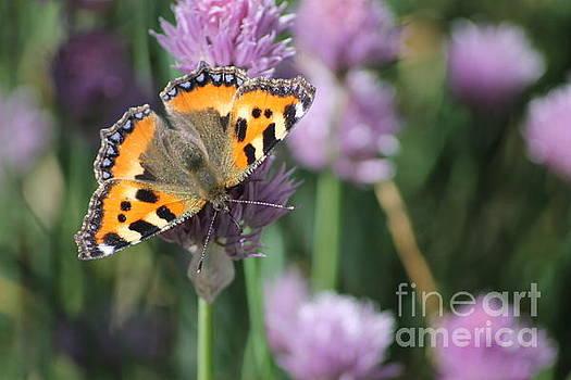 Butterfly On A Flower by Oleg Kozelskiy