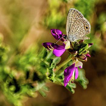 Butterfly on a purple flower by Emily Bristor