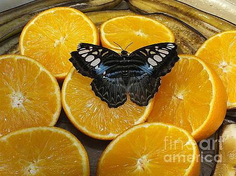 Butterfly on A Slice of Orange by John Ryan