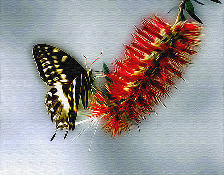 Butterfly on Bottle Brush Flower by Terry Shoemaker