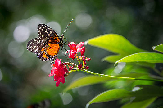 Butterfly on Flower by Ashleigh Mowers
