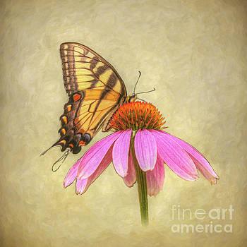 Butterfly on Flower by Randy Steele