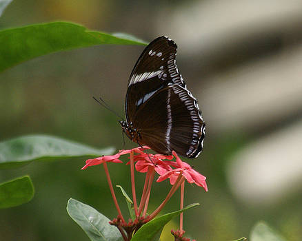 Butterfly on flowers by D Winston