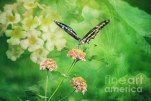 Butterfly on Lantana Montage by Toma Caul