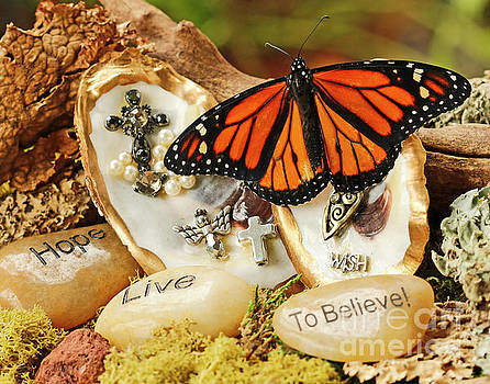 Butterfly on Oyster Shell Praying Photo by Luana K Perez