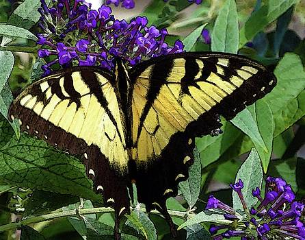 Butterfly on Purple by Coleman Mattingly