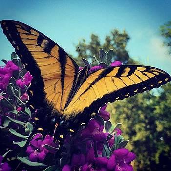 Butterfly On Sage. #butterfly #sage by Christi Vest