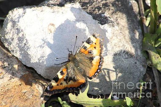 Butterfly On Stone by Oleg Kozelskiy