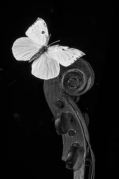 Butterfly On Top Of Violin by Garry Gay
