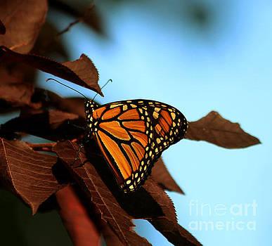 Butterfly on tree leaves by Lori Tordsen