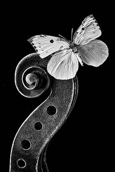Butterfly On Violin Scroll by Garry Gay