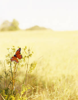 Butterfly On Wildflower In Country by Gillham Studios
