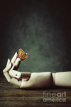 Butterfly On Wooden Hand by Amanda Elwell