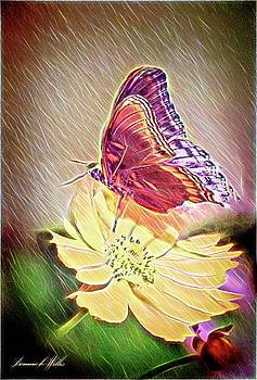 Butterfly on yellow flower by Bonnie Willis