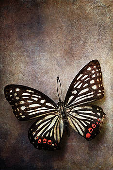 Butterfly over textured background by Stephanie Frey